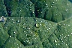 Detalle de una hoja con las gotas de rocío Imagen de archivo