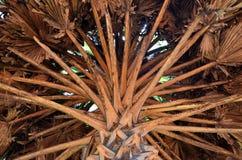 Detalle de una palmera, Srí Lanka fotografía de archivo