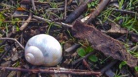 Detalle de una pequeña cáscara blanca del caracol Fotos de archivo