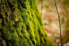Detalle del árbol foto de archivo