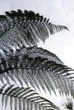 Detalle del árbol del helecho Fotos de archivo