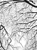 Detalle del árbol del invierno Imagenes de archivo