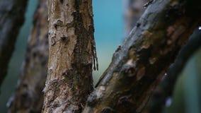 Detalle del árbol durante la lluvia