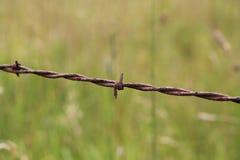 Detalle del alambre de púas con el fondo herboso Imagen de archivo libre de regalías