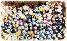 Detalle del arándano, del myrtillus del Vaccinium, de bayas maduras de arándanos y del efecto grahic libre illustration