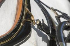 Detalle del arnés del caballo en Sevilla Fotos de archivo libres de regalías