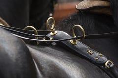 Detalle del arnés del caballo en Sevilla Fotos de archivo