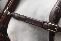 Detalle del arnés del caballo en Sevilla imagen de archivo