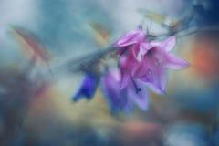 Detalle del bellflower fotografía de archivo