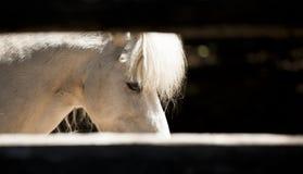 Detalle del caballo Fotos de archivo libres de regalías