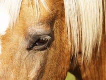 Detalle del caballo (178) Foto de archivo