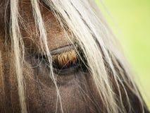 Detalle del caballo (40) Imagen de archivo