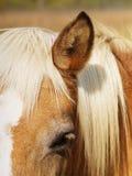 Detalle del caballo (48) Imagen de archivo libre de regalías