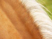 Detalle del caballo (61 Imagen de archivo libre de regalías