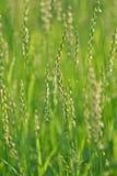 Detalle del campo de hierba verde Fotos de archivo libres de regalías