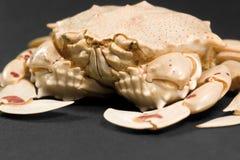 Detalle del cangrejo de la luna del ángulo inferior Foto de archivo
