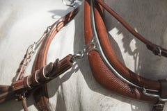 Detalle del cuello del arnés del caballo Imagenes de archivo