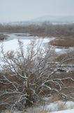 Detalle del día de la nieve, Yakima Delta, Richland, Washington Fotografía de archivo libre de regalías