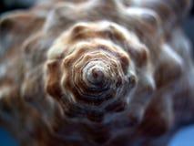 Detalle del espiral del shell del caracol Fotografía de archivo libre de regalías