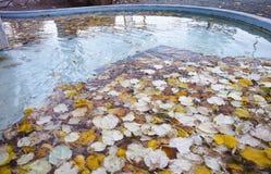 detalle del follaje del otoño en el agua superior en una fuente Fotografía de archivo
