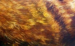 Detalle del fondo animal de la estructura de la piel, pintado a mano y gráfico Fotos de archivo