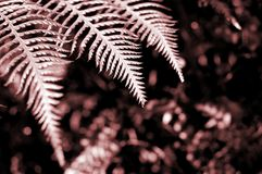 Detalle del helecho Foto de archivo libre de regalías