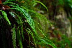 Detalle del helecho en el bosque del otoño Imagenes de archivo