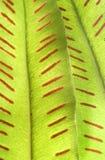 Detalle del helecho verde Imágenes de archivo libres de regalías