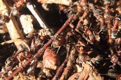 Detalle del hormiguero del bosque Imagen de archivo libre de regalías
