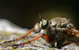 Detalle del insecto Fotografía de archivo