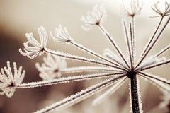 Detalle del invierno Imágenes de archivo libres de regalías