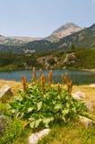 Detalle del lago en la montaña Pirin Imágenes de archivo libres de regalías