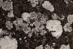 Detalle del liquen en una roca foto de archivo libre de regalías
