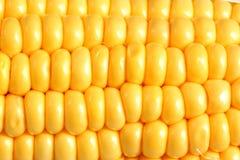 Detalle del maíz Imagen de archivo libre de regalías