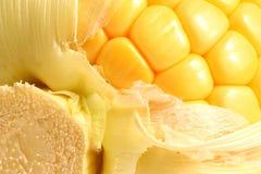 Detalle del maíz imagen de archivo