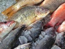 Detalle del mercado de pescados Fotografía de archivo