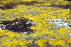 Detalle del musgo en piedra Imagen de archivo