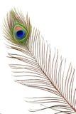 Detalle del ojo de la pluma del pavo real Fotografía de archivo