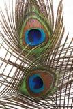 Detalle del ojo de la pluma del pavo real Imagen de archivo libre de regalías
