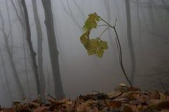 Detalle del otoño Foto de archivo libre de regalías