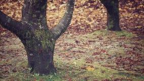 Detalle del paisaje del otoño Fotografía de archivo