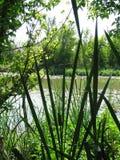 Detalle del pantano foto de archivo