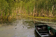 Detalle del pantano. Fotografía de archivo