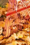 Detalle del rastrillo rojo del metal y pilas de hojas de arce amarillas brillantes en otoño Imagen de archivo libre de regalías
