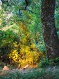 Detalle del solsticio de verano, Italia Vuelta de las hojas del verde a la naranja ardiente fotografía de archivo