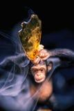 Detalle del str del pegamento del gorila del fragmento del concentrado del aceite del cáñamo aka fotos de archivo