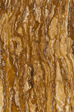 Detalle del travertino amarillo fotos de archivo