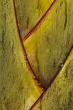 Detalle del tronco de árbol Fotografía de archivo libre de regalías