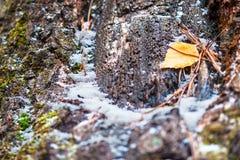 Detalle del tronco de árbol de decaimiento Cubierto con el musgo, nieve Foto de archivo libre de regalías