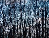 Detalle desnudo de los árboles Foto de archivo